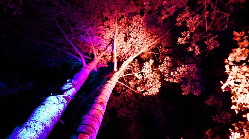 Zülpich - Leuchtende Gärten 2021